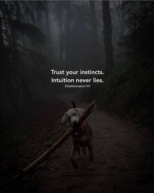 Positive Quotes Trust Your Instincts Quotes Boxes You