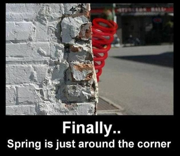 Most Funny Quotes Finallyspring Is Just Around The Corner