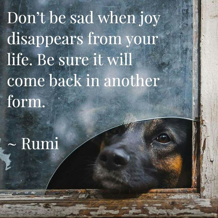Best Positive Quotes Rumi Quote Mehr Quotes Boxes You