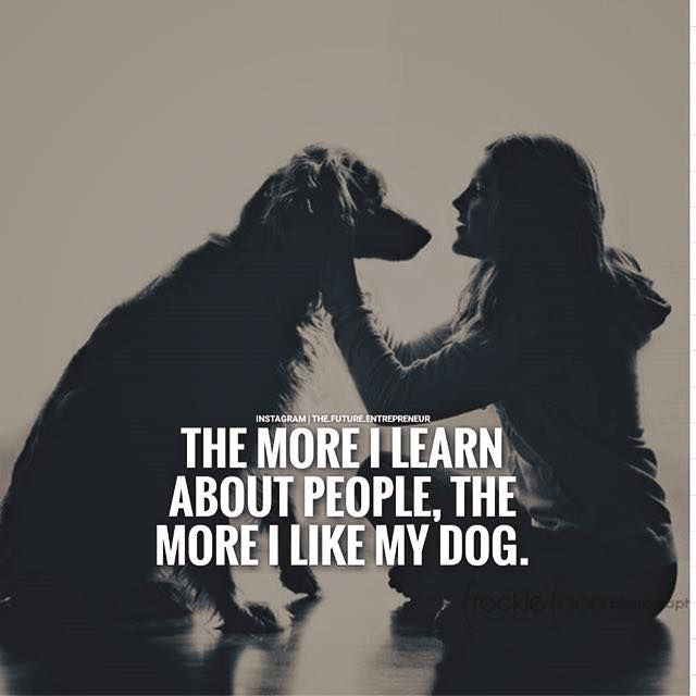 I Love My Dog Quotes Fair Positive Quotes  The More I Learn About People The More I Like My