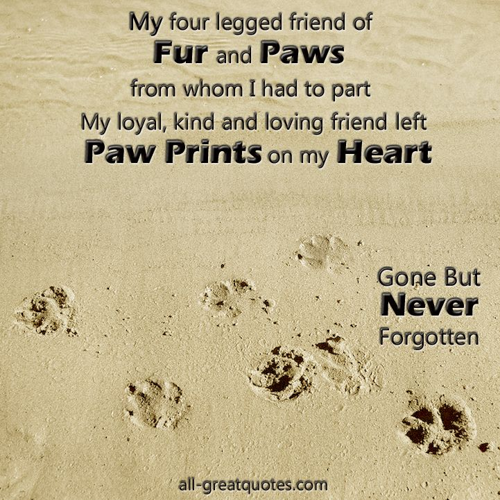 Quotes About Love 45 Loss Of Pet Quotes Gone But Never