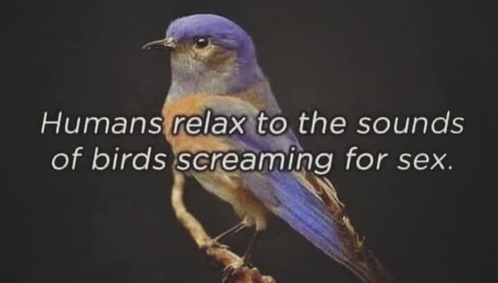 Most Funny Quotes Humans Relax To The Sounds Of Birds Screaming